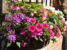 Sidmouth in Bloom_2