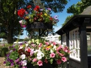 Sidmouth in Bloom_11