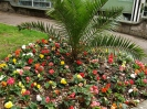 Sidmouth in Bloom_41