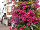 Sidmouth in Bloom_31