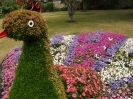 Sidmouth in Bloom_35