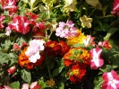 Sidmouth in Bloom_19
