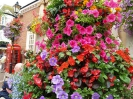 Sidmouth in Bloom_30